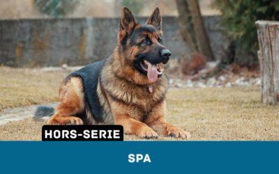 Une petite Histoire des Sociétés Protectrices des Animaux (SPA)